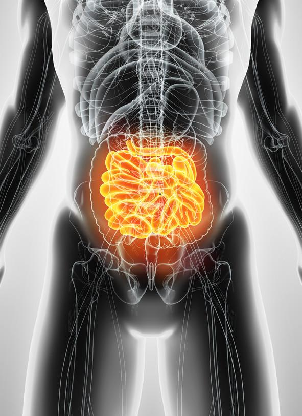 Darm / Dünndarm / Dickdarm / Magen / Blähungen / Probiotika / Darmsanierung