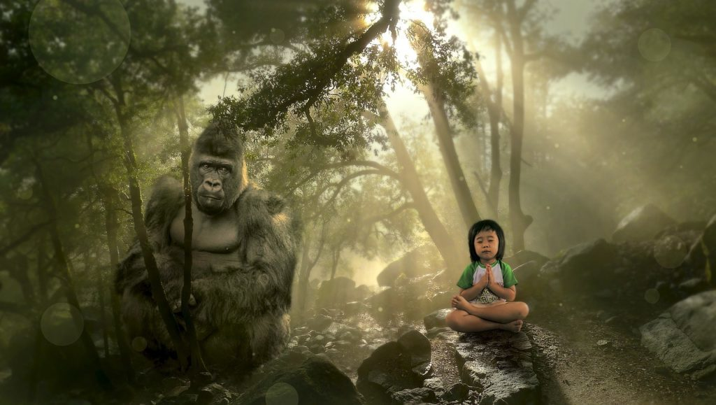 gorilla trommel herz hirn innere heilkräfte gesundheit