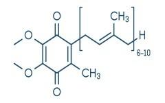 coenzym ubiquinol klein